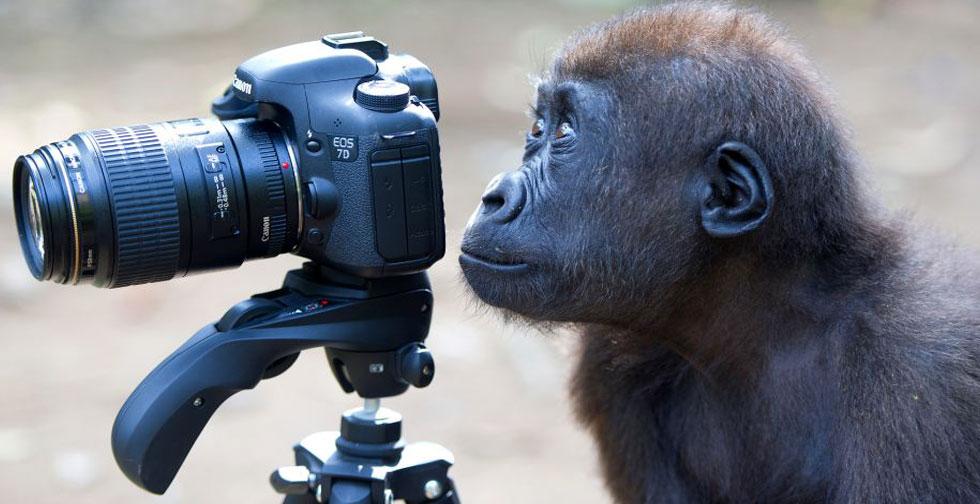 Monkey Snapper